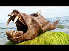 inquisitr.com/ Rare Whale Found: Omura's Whale Discovered On Western Australia Beach