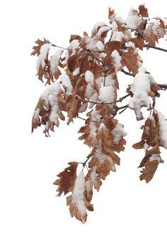still snowing (mary jo hoffman)