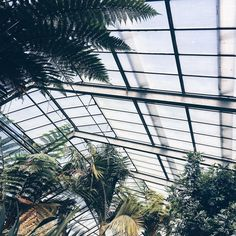 Wishing this was not a #latergram  #apdmincologne . . . #plantlover #plantstagram #greenhouses #minimalmood #mytinyatlas #dametraveler #lifewelltravelled