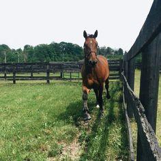 "gucci-equestrian: ""pop enjoying his day off :) "" Cute Horses, Pretty Horses, Horse Love, Horse Girl, Beautiful Horses, Beautiful Gorgeous, Farm Animals, Animals And Pets, Cute Animals"