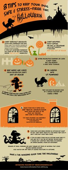 Planning on taking your dog trick-or-treating? Here are 8 tips to keep your dog safe and stress-free this Halloween. Halloween Safety Tips, Dog Halloween, Halloween Ideas, Halloween Costumes, Fu Dog, Dog Safety, Dog Hacks, Pet Safe, Dog Care