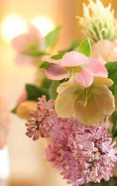 クリスマスローズとライラック : 一会 ウエディングの花