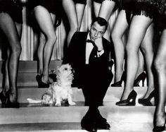Frank Sinatra had to share centre stage with Snuffy the cairn terrier for the 1957 musical Pal Joey.