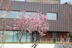 아름다운 꽃이 만발한 서울파트너스하우스.