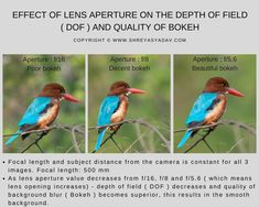 Wildlife and nature photography tip : Learn how to control depth of field and achieve beautiful bokeh using Lens aperture.