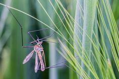 Produits naturels anti moustiques