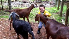 Pondering how to prepare your group of goats for winter? Don't be stuck without a plan. Here's Erin's take on getting them ready for winter. - GRIT Magazine