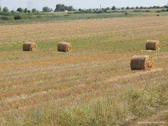 Views from the train, fields in Romania Fields, Romania, Train