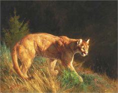 Greg Beecham, Mountain Lion 11 x 14, Oil on linen