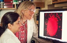 A promising new compound has been identified for targeting one of the most aggressive types of breast cancer. The compound, currently called UM-164, goes after a kinase known to play a role in the growth and spread of triple-negative breast cancer. UM-164 blocks the kinase c-Src and inhibits another pathway, p38, involved in this subtype.