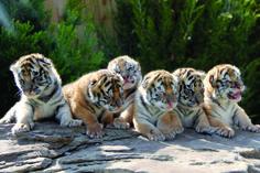 GW Zoo   Oklahoma