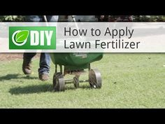 DIY Lawn Care Schedule For Cool Season Grasses