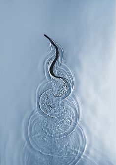 Photo of a snake slithering through water by Adam Fuss, Miami 2012