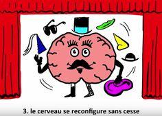 4 choses à retenir sur le cerveau