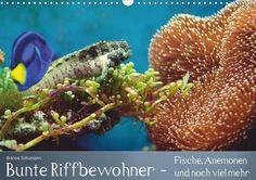 Bunte Riffbewohner - Fische, Anemonen und noch viel mehr / #Geburtstagskalender - CALVENDO #aquarium #riff #ozean #fisch #anemone #koralle #meerwasser #tropisch #bunt