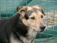 Kaunis Troy ❤️ Perustiedot ja taustat Paikalliset eläinsuojelijat tekevät Romaniassa parhaansa auttaakseen koiria ottamalla niitä suojiinsa ja saamaan siten mahdollisuuden uuteen kotiin. Tämän lisäksi he auttavat paikan päällä steriloimalla koiria ja pyrkivät vaikuttamaan myös ihmisten asenteisiin. Yksi romanialainen eläinsuojelija on Roxana Deissima,…Lue lisää ›