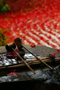 Autumn in Kennin-ji Temple, Kyoto