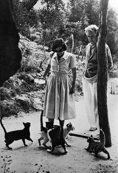 Robert Graves and multiple kitties.