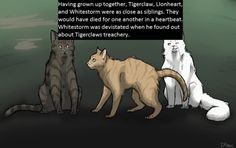 """I remember their relationship in """"Bluestar's Prophecy"""" Tigerstar was such a cutie kit as times! I hated it when Goosefeather totally dissed him and spazzed for nothin even tho he knew the treachery of his future"""
