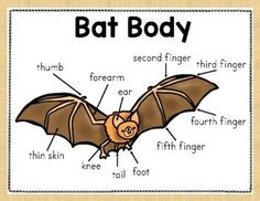 This resource includes basic information about bats to help young learners have fun while learning. Two easy books, one passage, cut and paste, color by code, and much more! #Bats #BatsUnit #Animals Information About Bats, Easel Activities, Thematic Units, Student Data, Elementary Science, Cut And Paste, Reading Resources, Teacher Newsletter, Comprehension