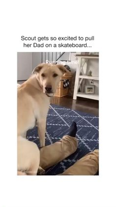 Silly Dogs, Cute Baby Dogs, Cute Funny Dogs, Cute Funny Animals, Cute Puppies, Funny Animal Jokes, Funny Animal Videos, Funny Animal Pictures, Animal Memes