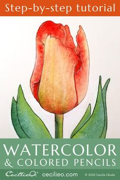 How to Watercolor Tulips and Retouching with Colored Pencils – Cecilie Okada Design Watercolor Pencil Art, Watercolor Flowers Tutorial, Watercolor Tips, Watercolour Tutorials, Watercolour Painting, Watercolor Plants, Blue Painting, Painting Flowers, Watercolor Landscape