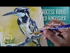 Painting A Pied Kingfisher Watercolor, Colored Pencils and Ink - YouTube Process Art, Birdwatching, Kingfisher, Colored Pencils, Watercolor, Ink, Youtube, Painting, Watercolour