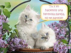 gatitos-en-canasta