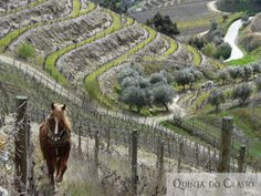 I Like It Wild And Natural...Always In River Douro's Valley In My Country Portugal !... http://www.quintadocrasto.pt/branco/?id=3