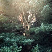 View Tree 3 by Ryan McGinley on artnet. Browse more artworks Ryan McGinley from Saatchi Gallery.