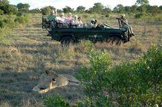 Sabi sabi in south africa - safari game drive