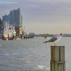 Hamburg Foto Elbphilharmonie Rickmer Rickmers und Möve | Bildschönes Hamburg