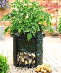 Urban gardening - Potato grow bag by Bakker