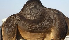 the indian city of bikaner host an annual camel festival in january. the designs are the results of trimming and dying the camel hair. photos steve hoge and osakabe yasuo