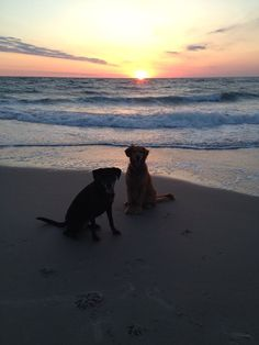 Pets Category. Two very happy pups at sunrise. Pets. Karen Priestner