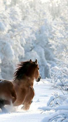 Horse running through the winter woods