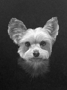 "Yorkie portrait I did last year. Charcoal 7""x10"". Andrew Memmelaar ©2011"