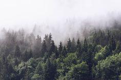 Fog Green Trees fototapet/tapet fra Happywall