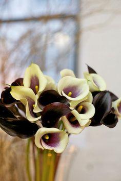 Z is for Zantedeschia (calla lily)
