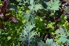 Salad Time. Photo by Freeman