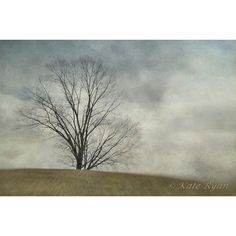 Tree Photography, Landscape Photography, Dreamy Nature Print, Wall Art... ($40) ❤ liked on Polyvore featuring home, home decor, wall art, photographic wall art, photography wall art, tree wall art, minimal home decor and minimalist wall art