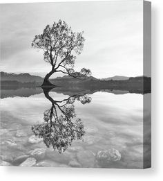 Black and White Wanaka Tree Canvas Print by Joshua Small. All canvas prints are professionally printed, assembled, and shipped within 3 - 4 business days and delivered ready-to-hang on your wall. Choose from multiple print sizes, border colors, and canvas materials. Wall Prints, Framed Art Prints, Poster Prints, Canvas Prints, Posters, Black And White Landscape, Black And White Wall Art, Tree Canvas, Canvas Wall Art