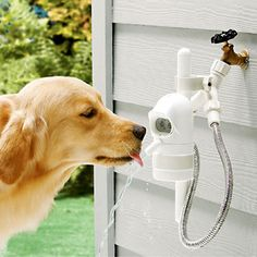 WaterDog—an Automatic Outdoor Pet Fountain. Running on a sensor, it detects when your dog approaches and then shuts off when he leaves.if only we had a dog.