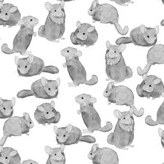 Chinchillas in Black and White by landpenguin