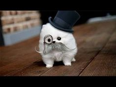 Cute white dog with monocle and hat :)