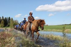 Horse safari passing water by VisitLakeland, via Flickr