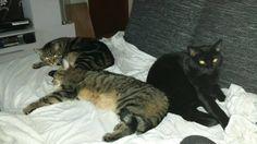 meine drei katzen Katze | Pawshake Nürnberg