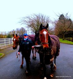 Vintage Crop & Kicking King coming in from the paddock at the Irish National Stud