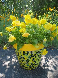 #pottery #pots #containers #planters Pansies
