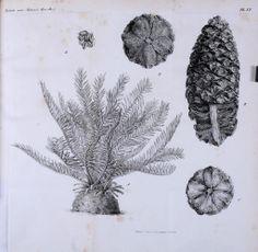 Vol 4 - Tijdschrift voor natuurlijke geschiedenis en physiologie. - Biodiversity Heritage Library